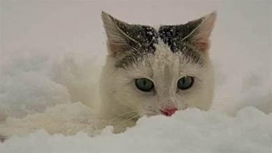 貓咪多少度以下會覺得冷,如果太冷的話,貓咪會有什麼後果?