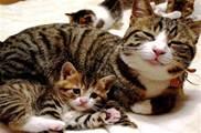 奶貓走路被嫌棄,貓媽:四隻腳各走各的,就無語!
