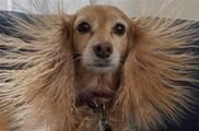 在冬天,阻礙我和寵物感情的不是冷,是靜電!