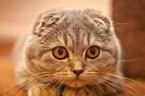 貓咪哪有壞心眼,只是想為你打造溫暖的家!