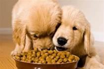 養狗之前是千手觀音,養狗之後就變成斷臂維納斯了……