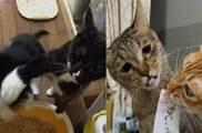 食物面前無兄弟!憋給貓貓談友誼!