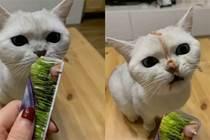 小貓咪能有多暴躁?半夜被貓追著罵了八百遍…