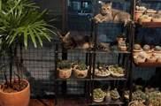 為了讓貓住得更舒服,網友把家裡改造成貓屋