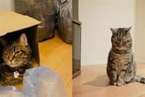 家裡貓沒事就這樣偷偷看我,請問是否有繩命危險?