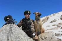 軍犬獲得三等功,退役後被送狗肉店?