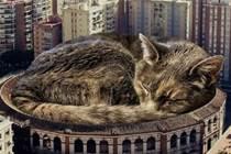 注意!我們的地球正在遭到巨大貓貓入侵