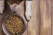 狗糧沒了怎麼辦?自製狗食其實很簡單