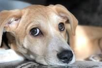 為什麼狗能記住好幾個名字?