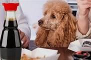 醬油是如何殺死一隻狗的?