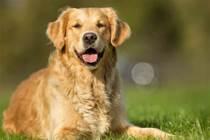 狗子:沒點特殊的本領,我都不好意思說我是一隻狗!!!