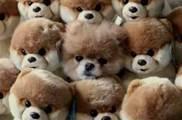 貓貓狗狗:你們看得見我嗎?