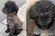 流浪小狗獨自坐在路邊,身上還穿著破爛的小衣服,牠也曾是誰的寶貝吧