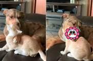 大狗主動給貓咪舔毛 「太過美味」 下一秒「整顆頭吃掉」 網驚:露出本性了