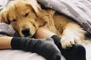 狗狗喜歡和你睡,不止是愛你,還蘊含這6個意思