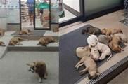 暖心!為了蹭空調冷氣,流浪狗在便利店門口紮堆躺臥 無人驅趕