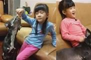 「開放帶寶貝上學」萌妹興奮帶汪哥哥 老師嚇傻不敢開門
