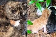 「暴風雨」來襲,流浪母貓把幼貓護在自己懷裡,自己濕透了幼貓卻沒事