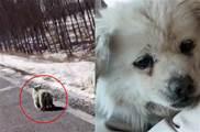 狗狗在「冰天雪地」中狂奔「尋找主人」,被她一把抱進懷裡:別怕,你有家了