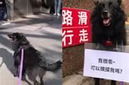 狗子是個「摸摸狂魔」,還經常跑去地鐵口 使出渾身解數,「強迫」人摸牠