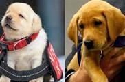 被淘汰警犬找領養,「條件苛刻」還有人搶:這都是哪裡來的小可愛
