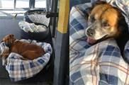 天氣越來越冷了,不忍流浪狗受凍,站務員用廢輪胎做床