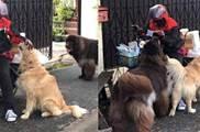 狗狗看到同伴被快遞員摸了後,吃醋得也跑來求摸摸:要雨露均沾啊