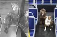 寒冬夜裡兩隻「瑟瑟發抖」的狗狗 在街上遊蕩 暖心司機:我載你們回家
