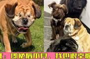 主人收養失明狗狗,家中8只毛孩不但不欺負牠,還主動為牠導盲