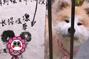 保安幫助毛孩找主人,畫了一張尋狗啟示 卻被無情嘲笑,看到狗狗後驚呼:一模一樣