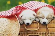 狗狗睡覺地方跟之前不同,可能是這5個原因,寵主要注意
