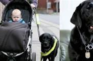 汽車失控導盲犬奮力掙脫繩子,及時推開嬰兒車救下小主人,網贊:太聰明瞭