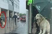 毛孩雨中等待主人購物,安保蜀黍不顧自己為汪撐傘,暖哭了:善良的蜀黍