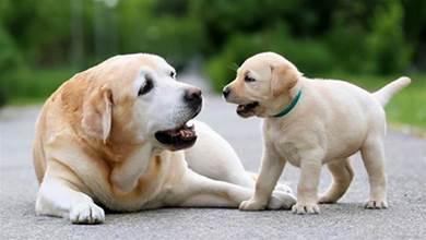 你知道怎麼判斷狗狗的年齡嗎?學會這5個方法,一眼就能看出來了