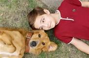 這4種情況,狗狗可能出現「咬人」的行為,再乖巧的狗狗也不例外