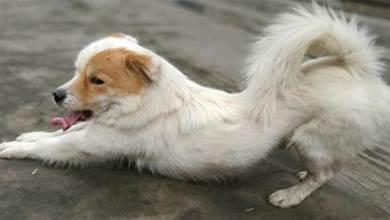 狗狗喜歡「伸懶腰」,不只是累了,還有這6個含義