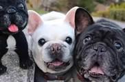 狗狗身上臭臭的,可能是這4個部位惹的禍,主人可以檢查下