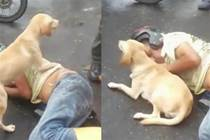 男子醉酒睡在馬路,忠犬守護身邊寸步不離,不讓陌生人靠近一步,網友大贊