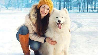 狗狗這4個「不懂事」的行為,其實是在保護你,不要錯怪牠
