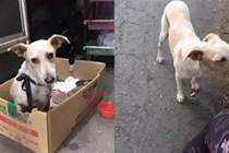 流浪狗進家一年,從排骨胖成糯米腸,讓人笑翻:大桶成長記