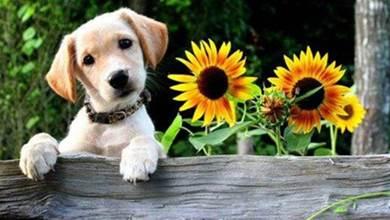 公狗有6個優點,怪不得女生都愛養,養到了很賺