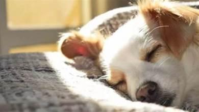 如果狗狗能為你做這5件事,真的非常愛你,遇到了不要放棄