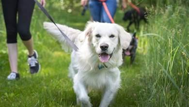 錯誤的養狗習慣會害了狗狗,這6種錯你犯過嗎,再不改正傷害更深