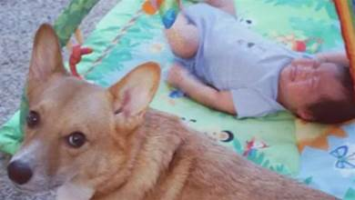 鏟屎官曬出狗子8年的「陪睡照」,每張都很銷魂,狗狗:孩子是我養大的