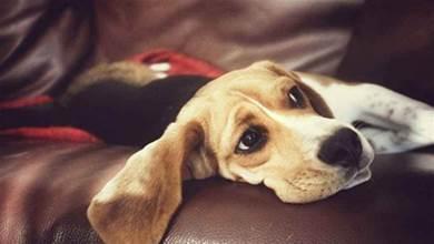 養狗飼主要知道,以下5種蔬菜,是狗狗不能吃的