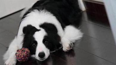 別對狗狗做這5件事了,不然牠會很傷心,覺得你不愛牠了
