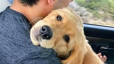 5大招撫摸狗狗,狗狗不僅開心,還會更加愛你